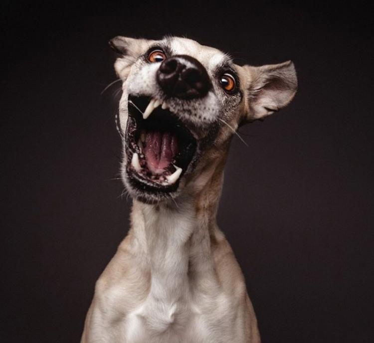 Пса ковбасить