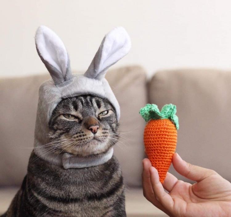 Морквина для мого зайчика