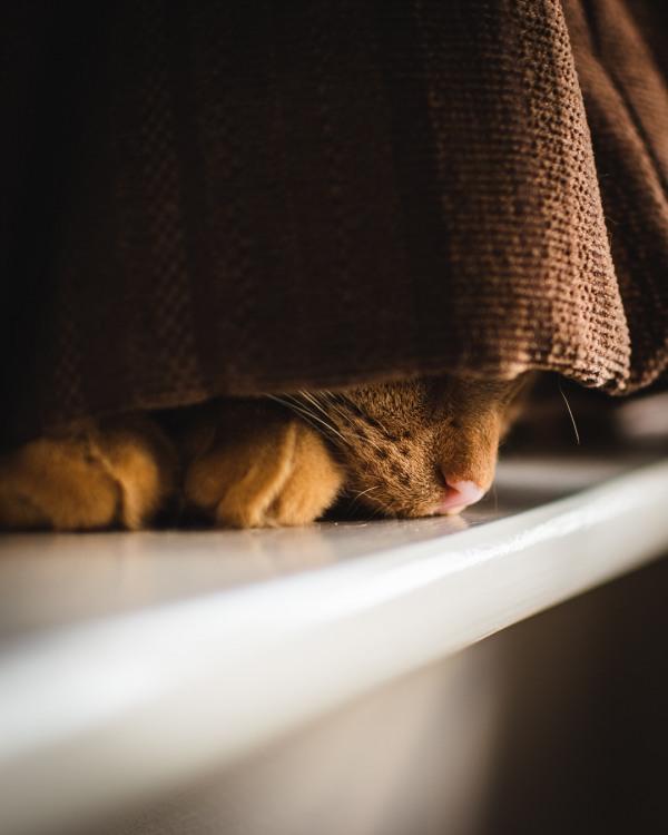 Кіт сховався