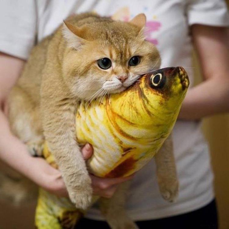 Кіт відпочиває на рибі