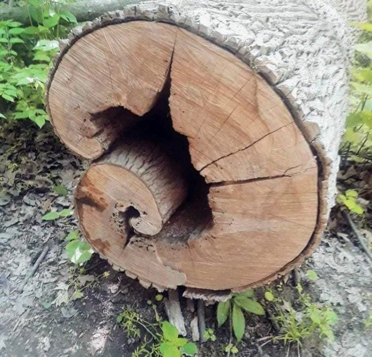 Дерево пішло в себе