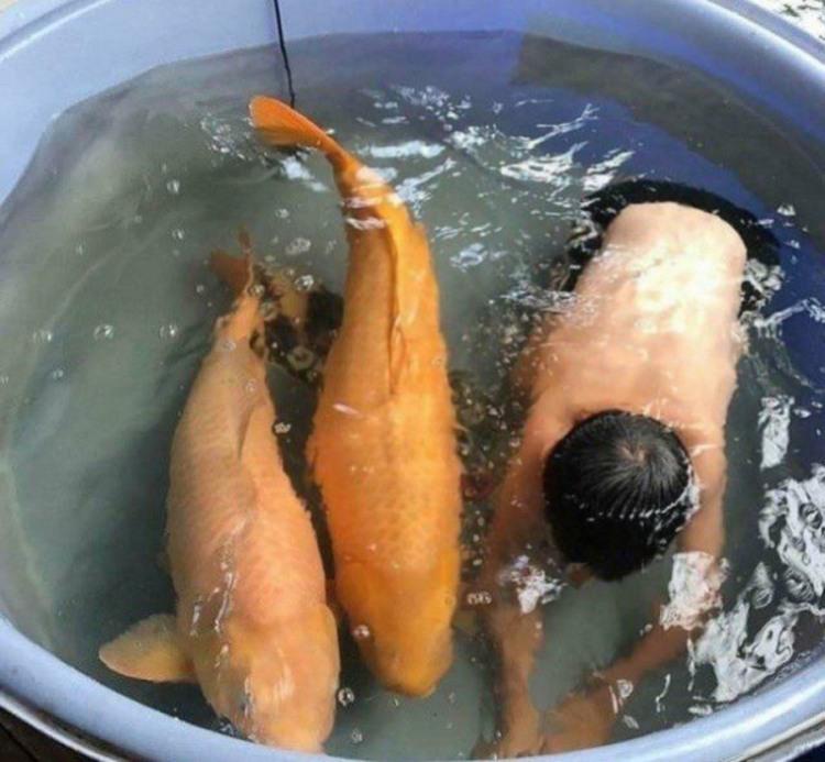 Дитина захотіла поплавати з рибками
