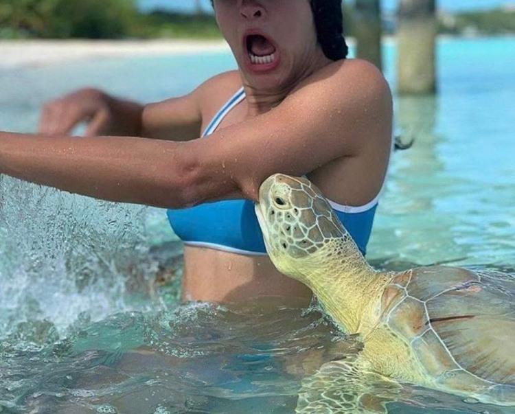 Черепаха хоче м'яса